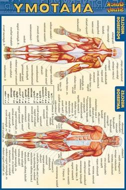 Anatomy Quick Reference Guide